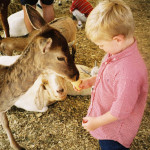Animal Records Solutions Petting Zoo 3
